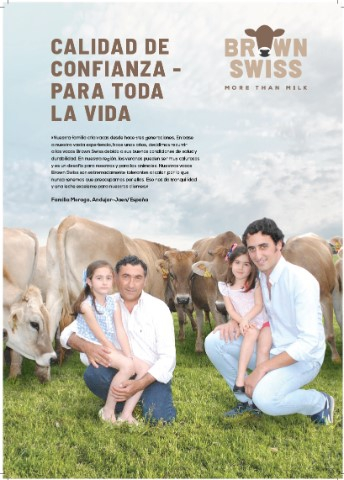Foto Brown Swiss España